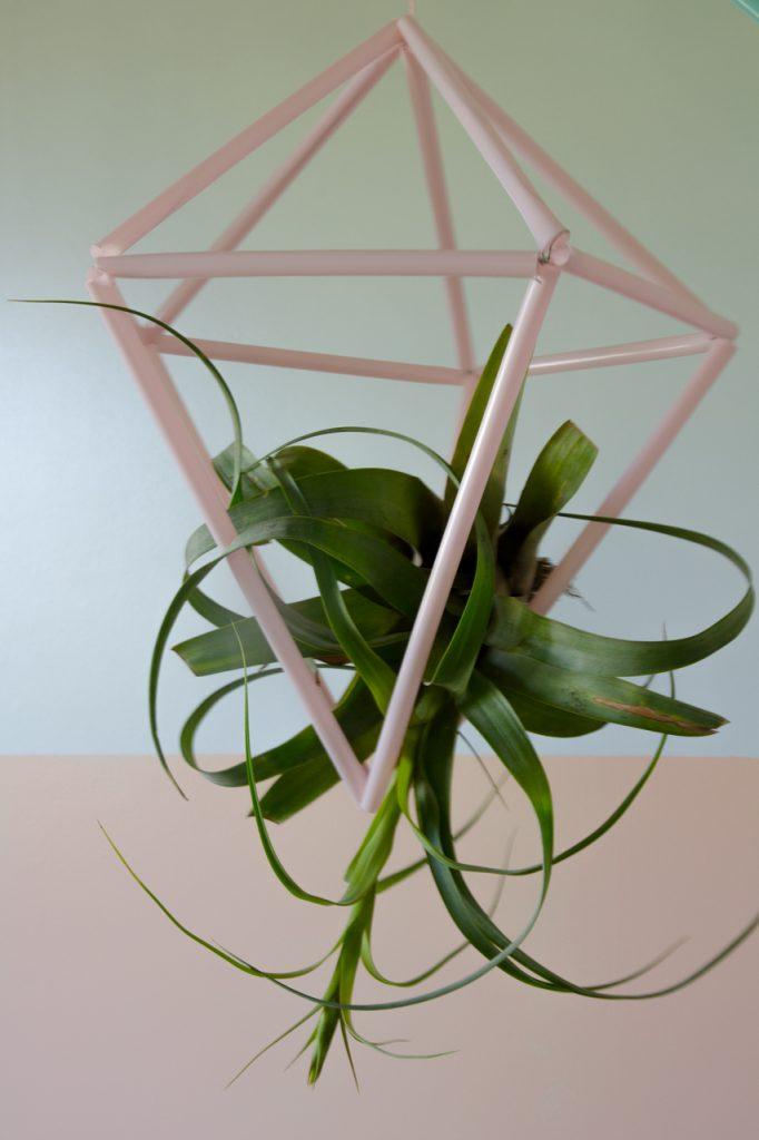 הדרכה ליצירת מתלים לצמחי אוויר מקשים