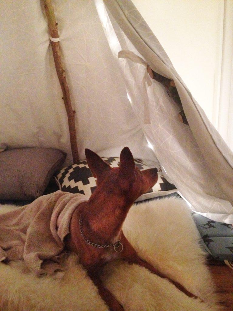 מוריס באוהל