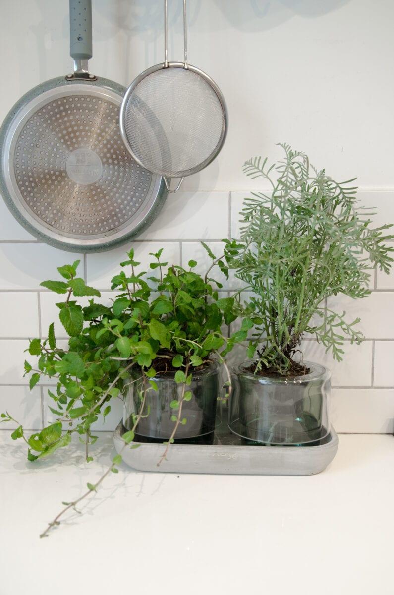מדריך לשתילת צמחים ביתיים- צמחי תבלין בתוך הבית במעמד עציצים עם מערכת השקייה פנימית