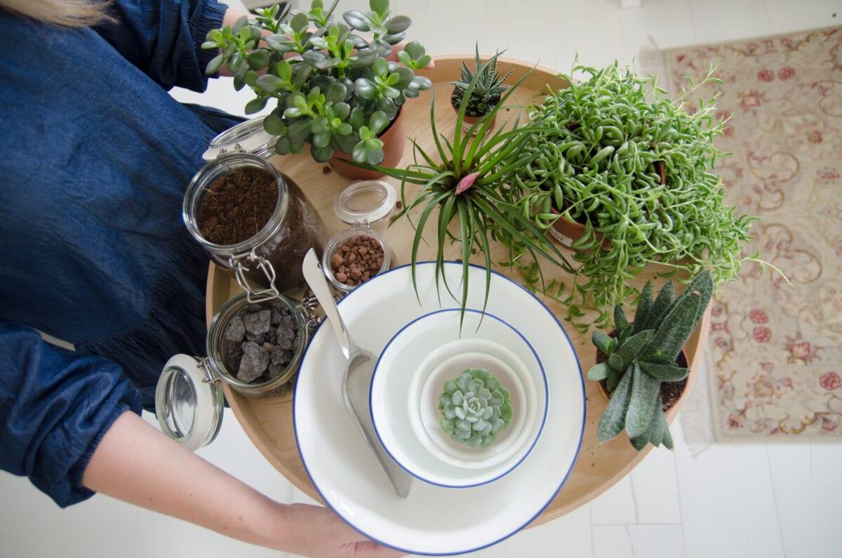 מדריך לשתילת צמחים ביתיים-ערכת מתנה לשתילה בייתית