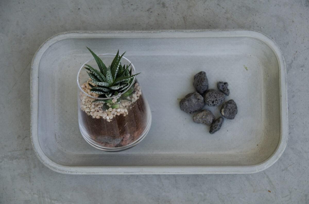 מדריך לשתילת צמחים ביתיים- סקולנטים בכוסות יין