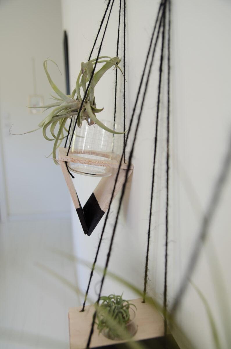 מדריך לשתילת צמחים ביתיים- הדרכה להכנת מתלי עץ לצמחי אוויר