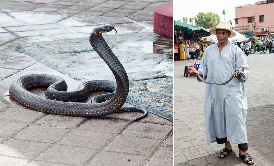 מקסמי נחשים בכיכר ג'מעה אל- פנה במרקש