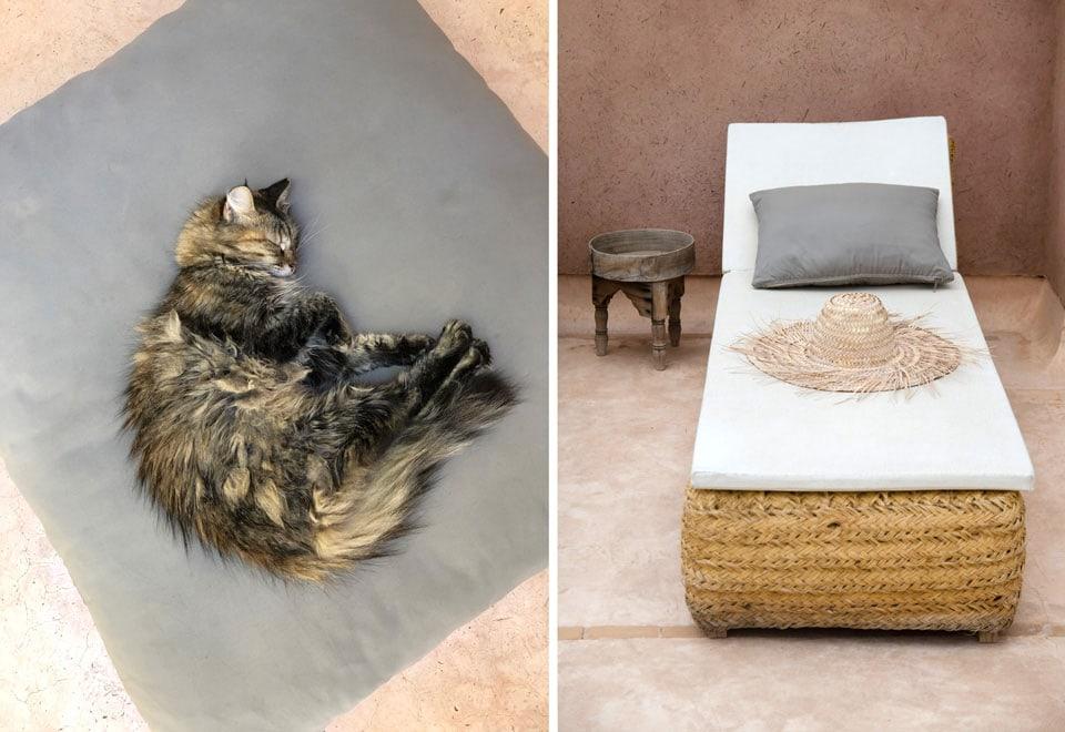 חתולים מפונקים מרוחים על הכיסאות על גגות מרקש